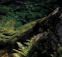 Depth of green by Duncan Cunningham