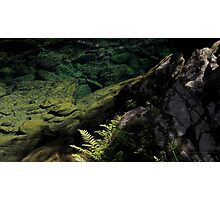 Depth of green Photographic Print