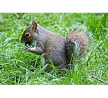 Squirrel eating nut Photographic Print
