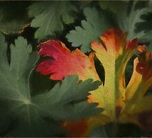 Design in Autumn Colours by Gerda Grice