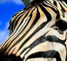Zebra Profile Macro by Nicolas Raymond