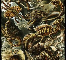 Haeckel's Lizards and Reptiles by diane  addis