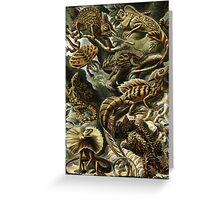 Haeckel's Lizards and Reptiles Greeting Card