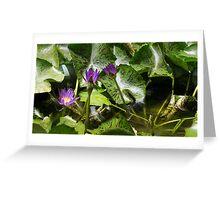 Water Lilies - Koh Samui Greeting Card