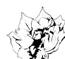 Sketched Peony Edit by NancyAnnDesign