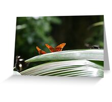 Ready to fly! Greeting Card