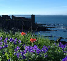 St Andrews Castle Amongst Wild Flowers by Adrian Wale