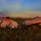 Focus on the raindrops ... not the mushrooms by myraj