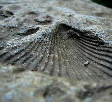 Shell Impression by RlyGoingPlaces