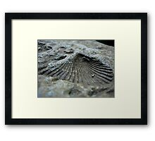 Shell Impression Framed Print