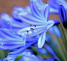 Backyard Blossom II by Rosalee Lustig
