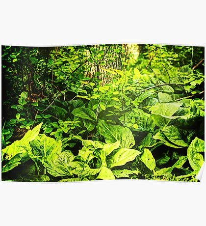Skunk Cabbage Thicket Poster