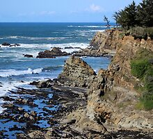 Cape Arago, Oregon by Moira Drake