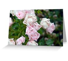 Beautiful small light pink flowers in the garden. Greeting Card