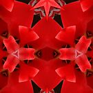 Kaleidoscope Geometry Patterns From Nature 5 by Kenneth Grzesik