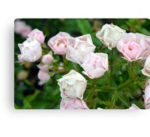 Beautiful small light pink flowers in the garden. Canvas Print