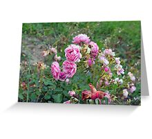 Colorful flowers in the garden. Greeting Card