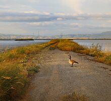 Goose by gerardofm4
