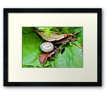 A tiny Snails abode.........Dorset UK Framed Print