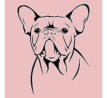cute french bulldog face Photographic Print