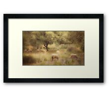 Sheep grazing in the Spanish countryside. II Framed Print