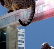 Moon-Gazing Cat Sticker