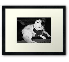Beaver the librarian Framed Print
