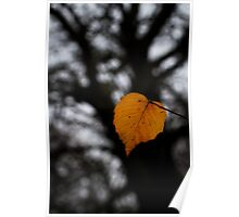 Lonely Little Leaf Poster