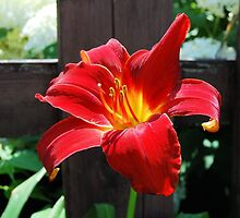 Red Lily by Kathleen Brant