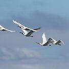 Spoonbill Flight by byronbackyard