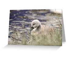 Hiding in the grasses Greeting Card