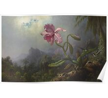 Martin Johnson Heade - Two Hummingbirds With An Orchid 1875. Garden landscape: garden view, trees and flowers, blossom,  lotus blossom, botanical park, orchid, wonderful flowers Poster