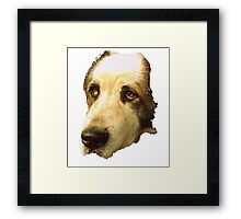 big sad dog Framed Print
