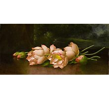 Martin Johnson Heade - Lotus Flowers A Landscape Painting In The Background. Still life with flowers: still life with flowers, flowers, hummingbird, nest, orchid,  lotus blossom, wonderful flower Photographic Print