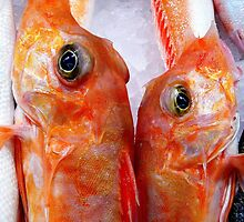 Fresh Fish by Marion Sauer