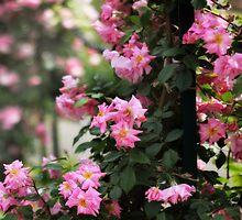 Rose Garden Trellis by Jessica Jenney