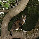 The Trees Are Mishu's Second Home by Dennis Melling