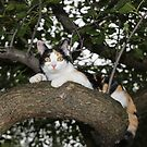 I Can Do Anything That My Big Brother Mishu Can Do by Dennis Melling