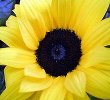 Blue Eyed Sunflower by Anivad - Davina Nicholas