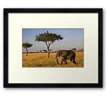 Elephant Safari Framed Print