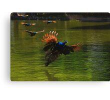 bird - poj Canvas Print