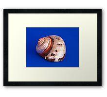 Sea Shell on Blue Framed Print