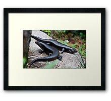 the reptile - kp Framed Print
