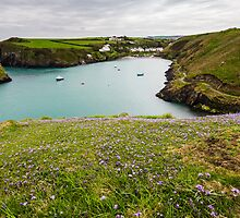 Abercastle Harbour in Spring, Pembrokeshire, Wales. UK by Heidi Stewart