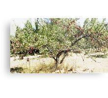 Pioneer Orchard Apple Tree Metal Print