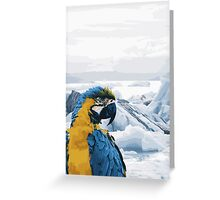 Parrot on Holiday Greeting Card
