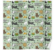 Day in the life of a Cat  Poster