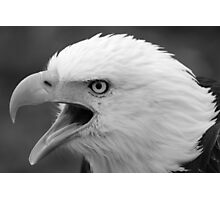 American Bald Eagle Calling Photographic Print