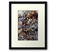 Points Of Light Framed Print