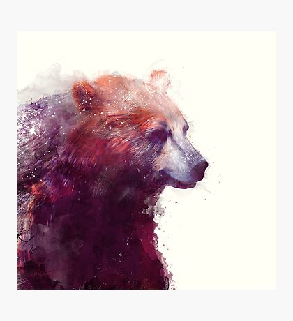 Bear // Calm - Square Format Photographic Print